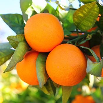 orange_canstockphotocsp6255979_small_5.jpg